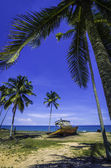 Abandone ship and coconut tree — Zdjęcie stockowe