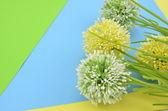 Trois fleurs artificielles de vert et jaune sur fond bleu, vert, rouge et jaune — Photo