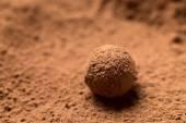Chocolate truffle dessert close up  — Stock Photo