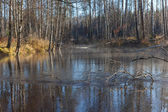 Autumn wood in solar weather at the river — Stock Photo