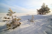 The frozen trees on snow coast of the winter sea Barents — Stock Photo