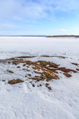 Ice and hummocks on the bank of the winter  sea.   — Stock Photo
