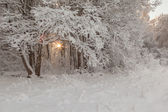 Winter snow-covered wood. — Stock Photo