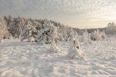 Wood winter glade. — Stock Photo