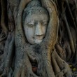 Buddha head covered by roots of a tree at Ayutthaya province in Thailand — Stock Photo #77398618