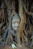 Cabeça de Buda coberta por raízes de uma árvore na província de Ayutthaya na Tailândia — Fotografia Stock