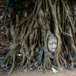 Buddha head covered by roots of a tree at Ayutthaya province in Thailand — Stock Photo #77417414
