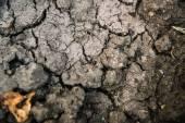 Impressive cracked earth — Stock Photo