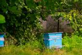 The old hive for bees in the garden, wooden boxes. — Stock Photo