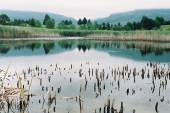 Calm lake with reeds — Stock Photo