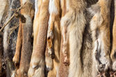 Pelts of fur animals hang on rope — Stock Photo