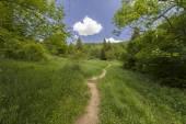 Colinas verdes — Foto de Stock