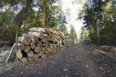 Manejo forestal — Foto de Stock