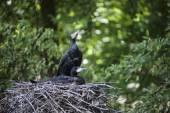 Cormorants — Stock Photo