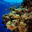 Coral reef — Stock Photo #70971741