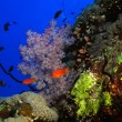 Coral reef — Stock Photo #70971757
