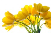 Flowers tulips yellow bouquet isolated on white — Stock Photo