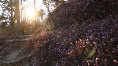 森林与鲜花 — 图库视频影像