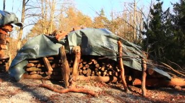 Logs in the pine forest — Stock Video