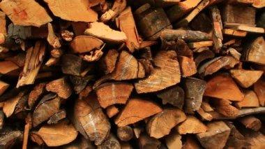 Doğal ağaç günlükleri — Stok video