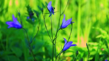 Yeşil çimen çiçekler — Stok video