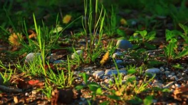 Plants and stones on the ground — Wideo stockowe