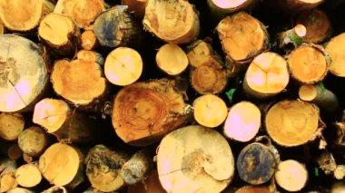 Tree trunks lying in wood — Stock Video