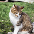 The cat is shy — Stock Photo #70691443