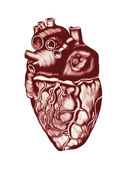 Human Heart Anatomy: chambers, valves and vessels, isolated over white. — Stock Photo