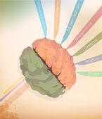 мозг — Cтоковый вектор