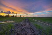 A Beautiful Sunset At Paddy Fields, Kedah Malaysia — Stock Photo