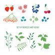 Set of berries, herbs and plants. — Stock Vector #71312773