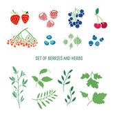Set of berries, herbs and plants. — Stock Vector