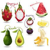 Sada tropické ovoce — Stock vektor