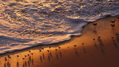 Sunset on the beach with birds — Stockfoto