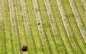 Tractor working in field of wheat. — Stockfoto