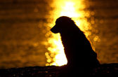 Sunset on the beach with dog — Stock Photo