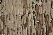 Tree cortex textured background — Stock Photo