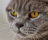 Cute cat portrait with artificial light — Stock Photo