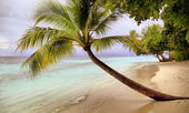 Tranquil beach with beautiful vegetation . — Stock Photo