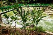 """Reserva ecológica """"Las Terrazas"""" Cuba — Foto de Stock"""