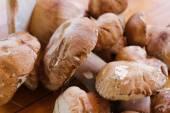 Vários cogumelos selvagens — Fotografia Stock