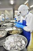 Tra Vinh, Vietnam - November 19, 2012: Workers are peeling and processing fresh raw shrimps in a seafood factory in the Mekong delta of Vietnam — Stock Photo