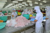 Tien Giang, Vietnam - March 2, 2013: Workers are testing the color of pangasius fish in a seafood processing plant in Tien Giang, a province in the Mekong delta of Vietnam — Stock Photo
