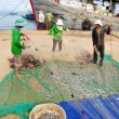 Quang Ngai, Vietnam - July 31, 2012: Fishermen are removing anchovies fish from their nets to start a new working day in Ly Son island — Stock Photo #76650621