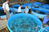 Lam Dong, Vietnam - May 5, 2012: A sturgeon hatchery is being introduced to farmers in Tuyen Lam lake, Da Lat city — Stock fotografie