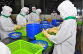 Hau Giang, Vietnam - June 23, 2013: Workers are working in a shrimp processing plant in Hau Giang, a province in the Mekong delta of Vietnam — Stock Photo