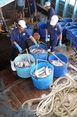 Tien Giang, Vietnam - August 30, 2012: Pangasius catfish is being tranfered from the main boat to the processing plant by buckets — Stock Photo