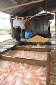 Dong Thap, Vietnam - August 31, 2012: Farming of red tilapia in cage on river in the mekong delta of Vietnam — Stock Photo