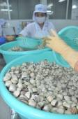 Tien Giang, Vietnam - September 11, 2013: Clams are being washed and packaged in a seafood processing plant in Tien Giang, a province in the Mekong delta of Vietnam — Stock Photo
